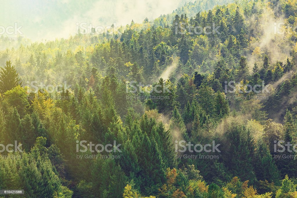 Healthy deciduous and coniferous trees in the early autumn. stock photo