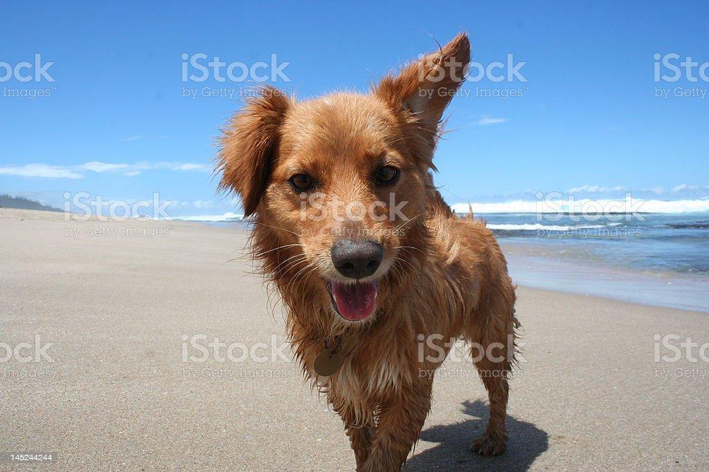 Healthy dog royalty-free stock photo