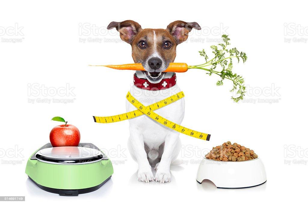 healthy dog stock photo