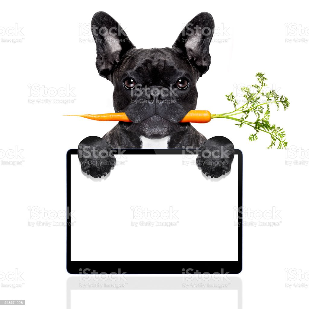 healthy food dog stock photo