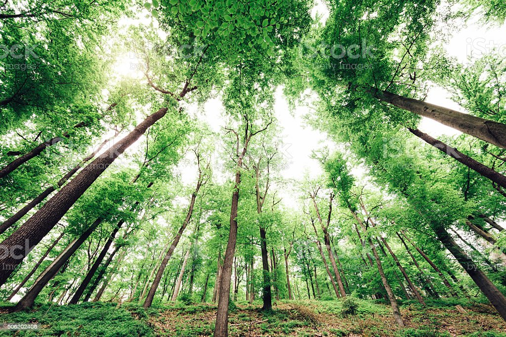 Healthy Green Forest stock photo