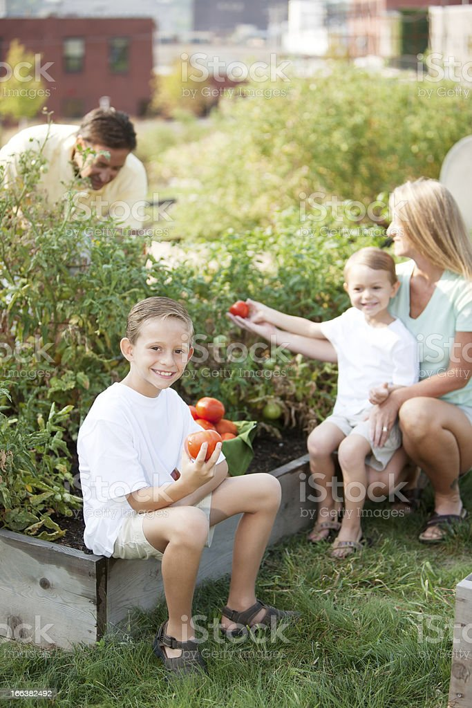 Healthy Lifestyle: Caucasian Family Picking Homegrown Vegetables in Urban Garden royalty-free stock photo