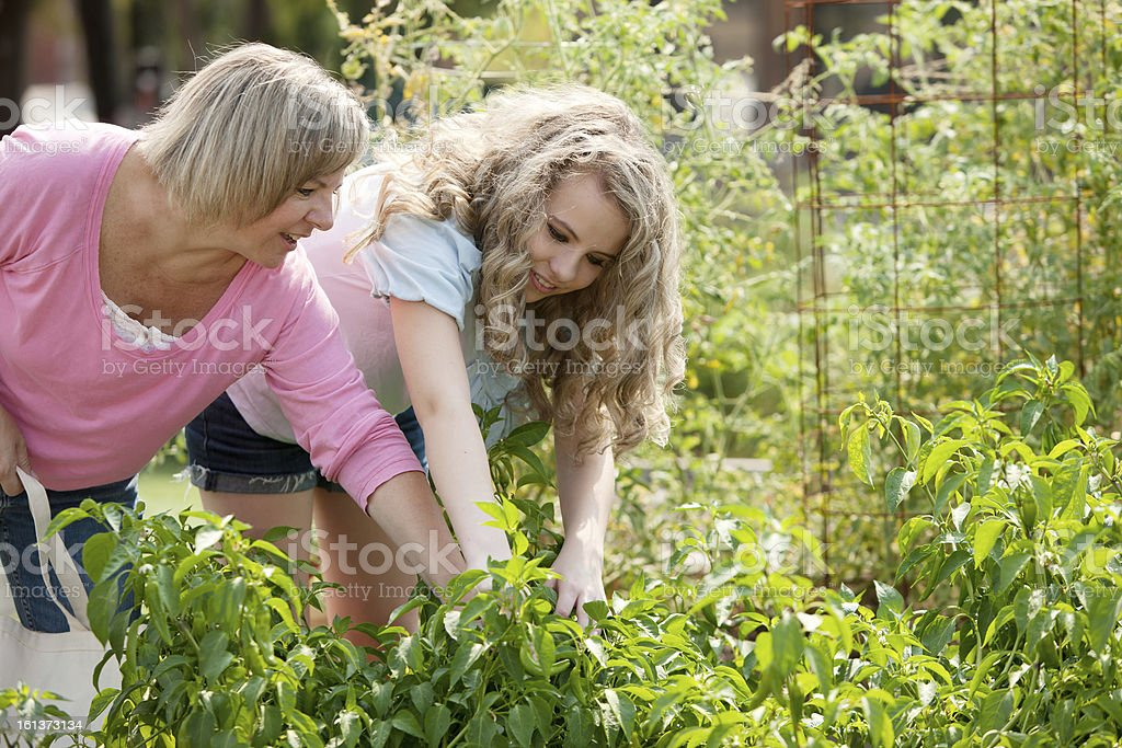 Healthy Lifestyle: Caucasian Mother Daughter Picking Homegrown Vegetables royalty-free stock photo