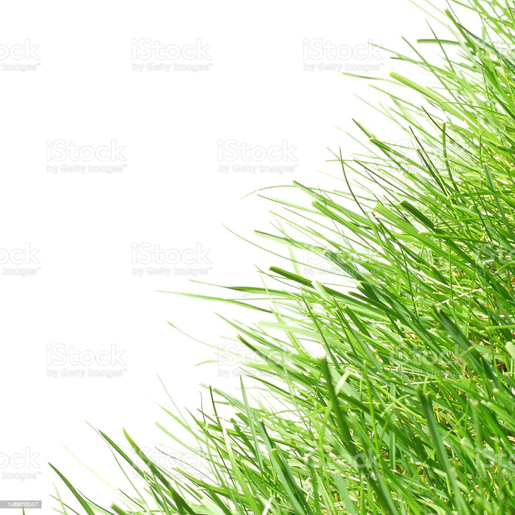 Healthy lush grass. royalty-free stock photo