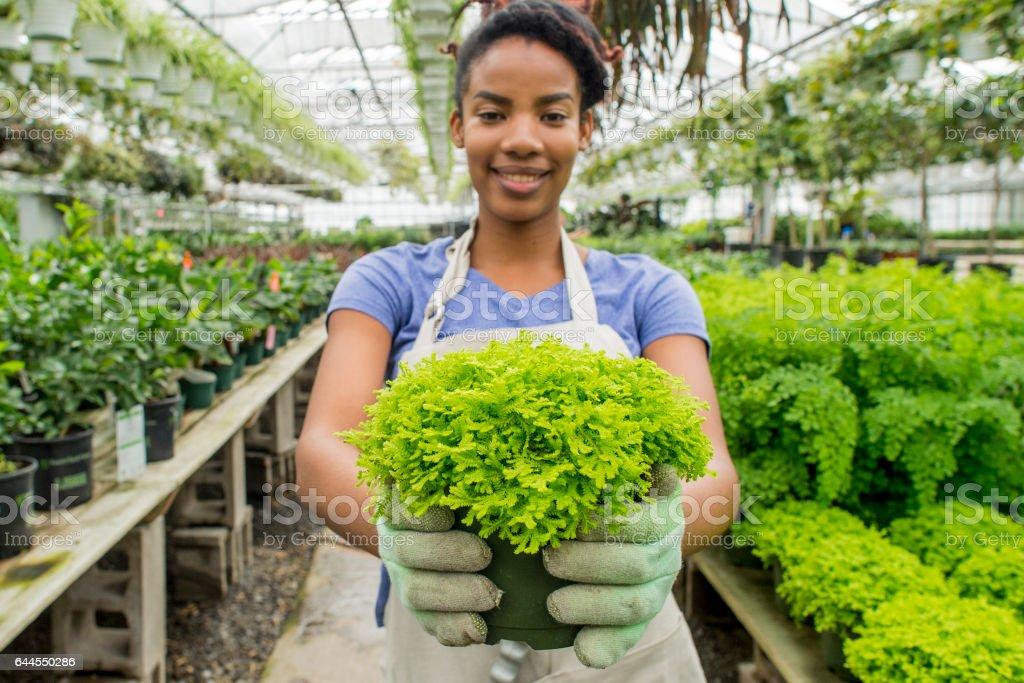 Healthy Plant stock photo