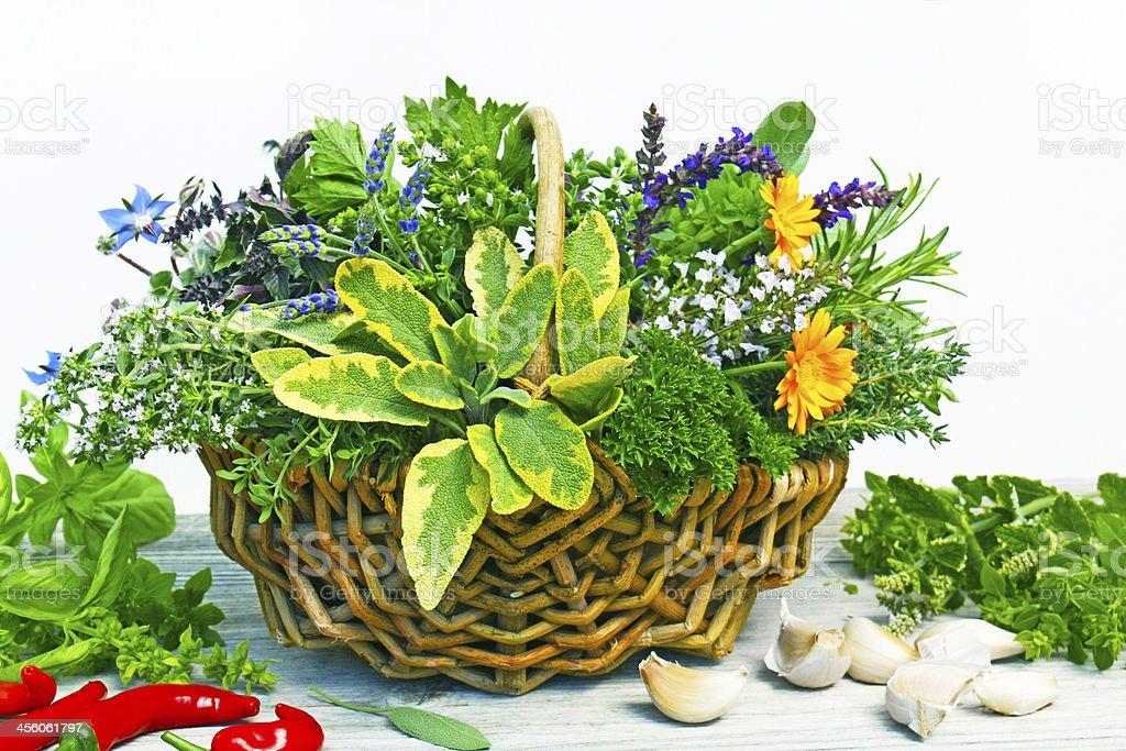 Des plantes photo libre de droits