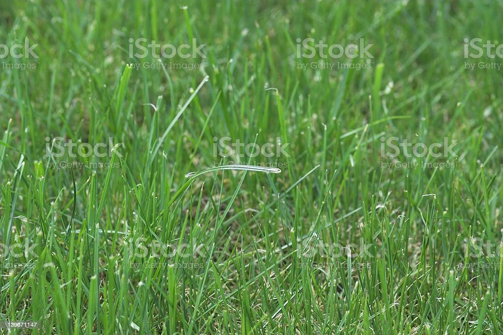 Healthy Premium Lawn stock photo
