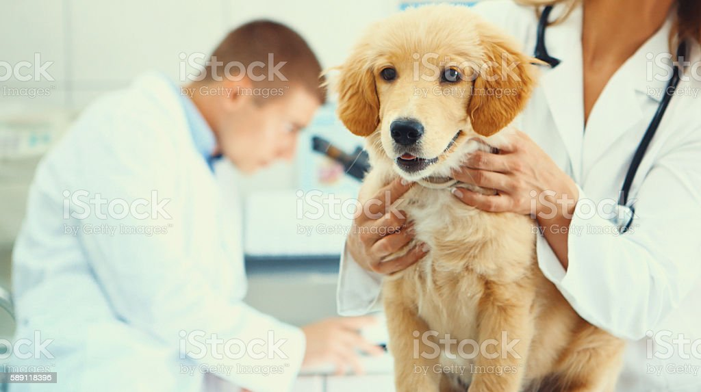 Healthy puppy after medical exam stock photo