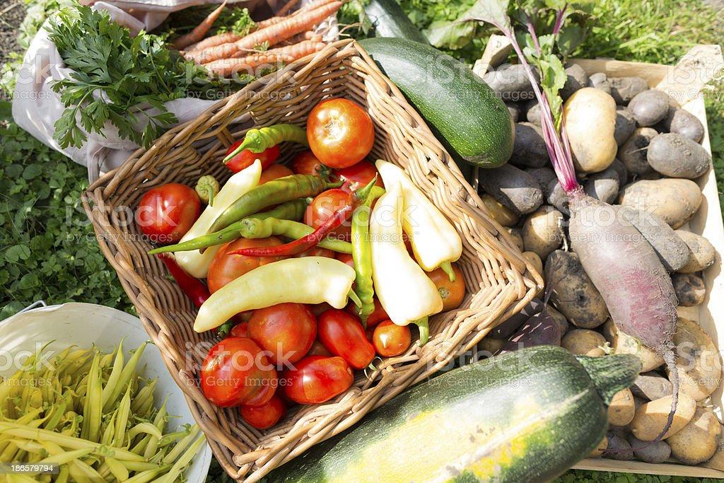 healthy vegetables organic farm royalty-free stock photo