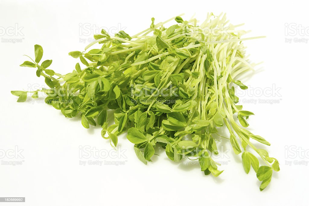healthy washed snow pea sprouts royalty-free stock photo