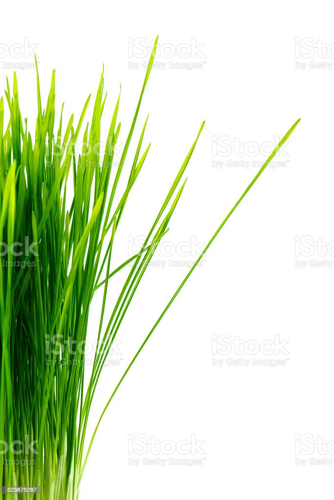 Healthy Wheatgrass stock photo