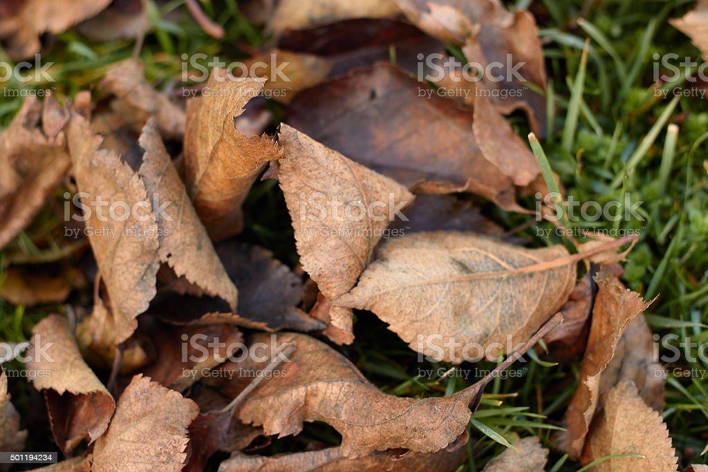 Heap of autmn leaves. stock photo
