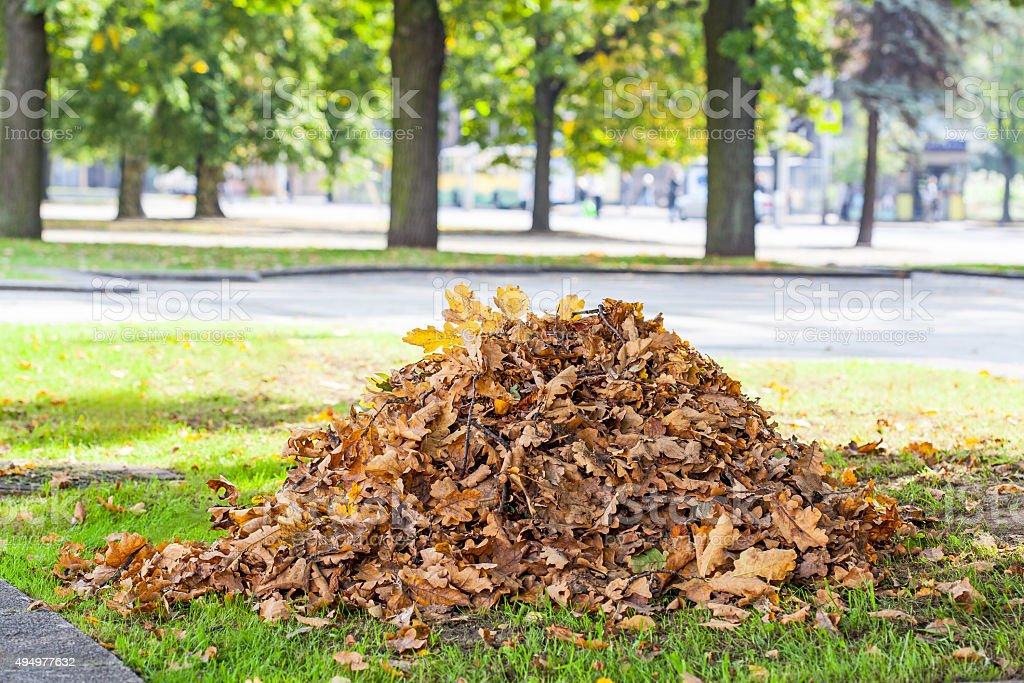 Heap of dry oak leaves stock photo