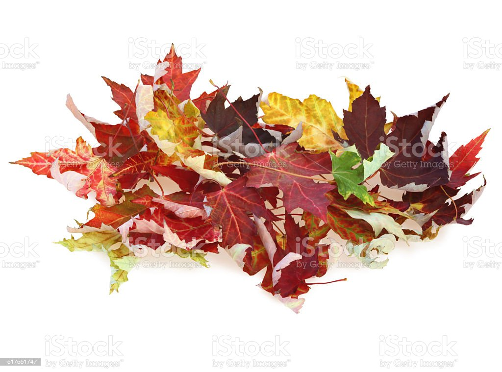 Heap of fall leaves stock photo
