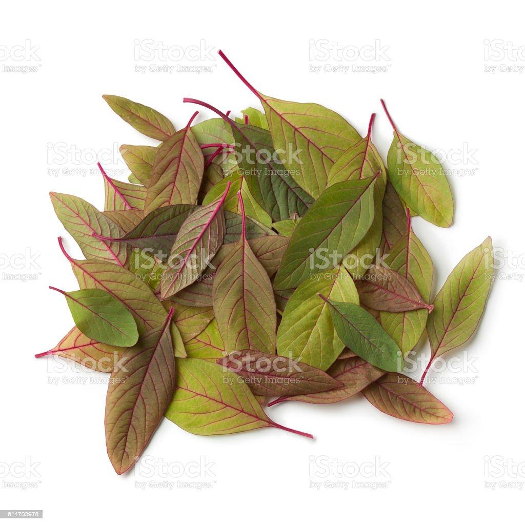Heap of fresh amaranth leaves stock photo