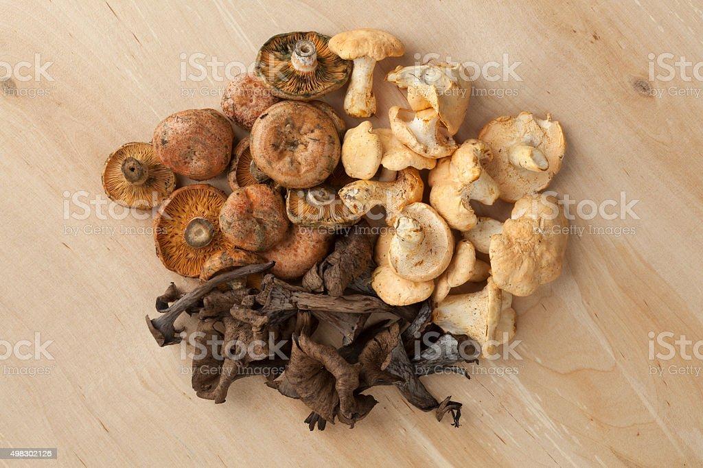 Heap of fresh wild mushrooms stock photo