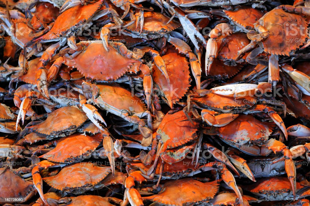 Heap of freshly Steamed Blue Crabs ready to eat royalty-free stock photo