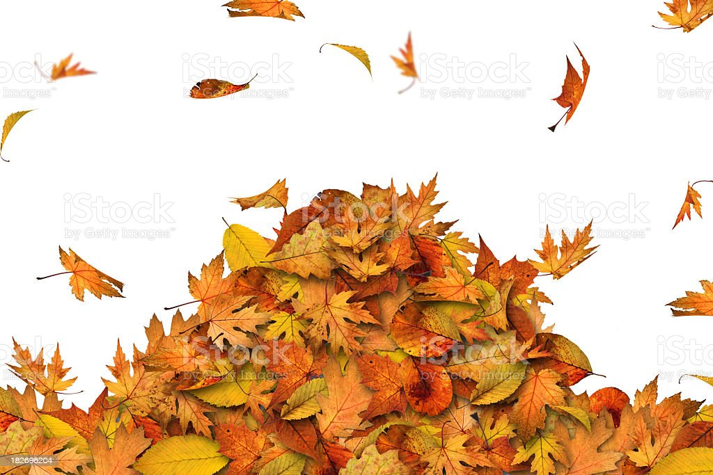 Heap of leaves royalty-free stock photo