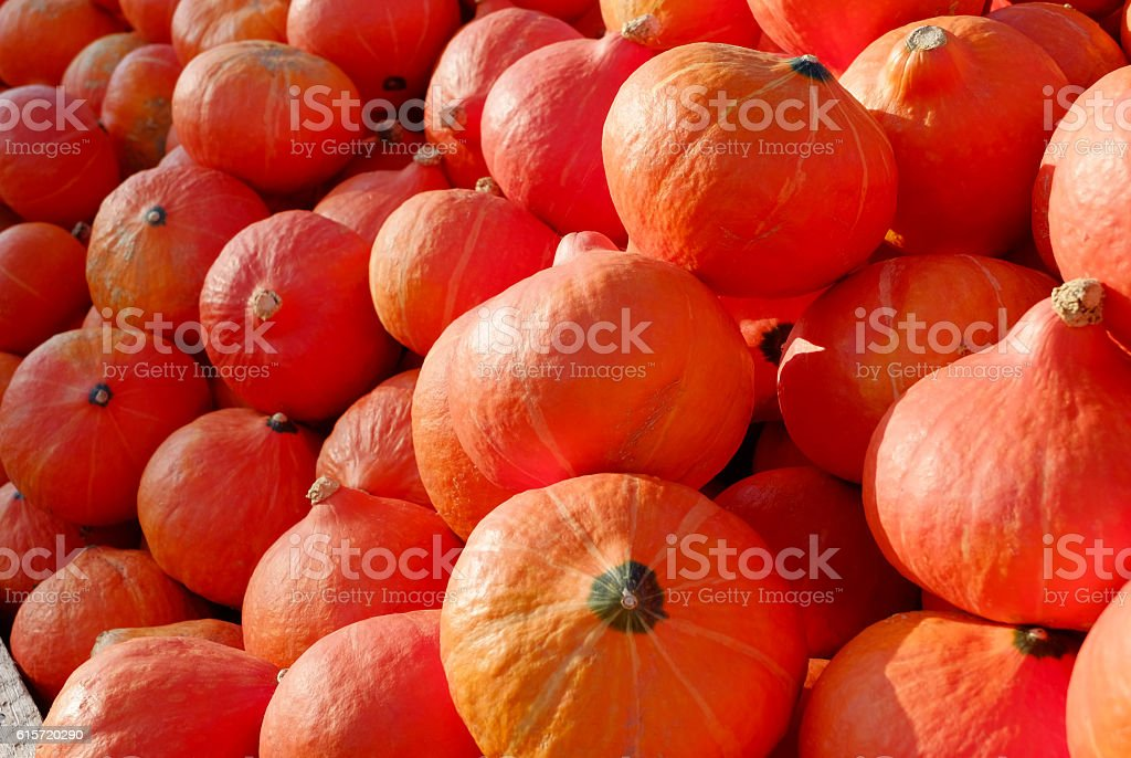 Heap of ripe Pumpkins stock photo