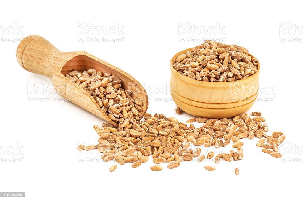 heap of ripe wheat stock photo