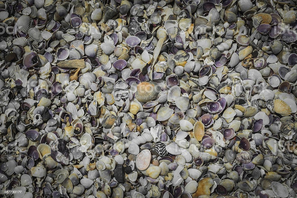 heap of seashell background stock photo