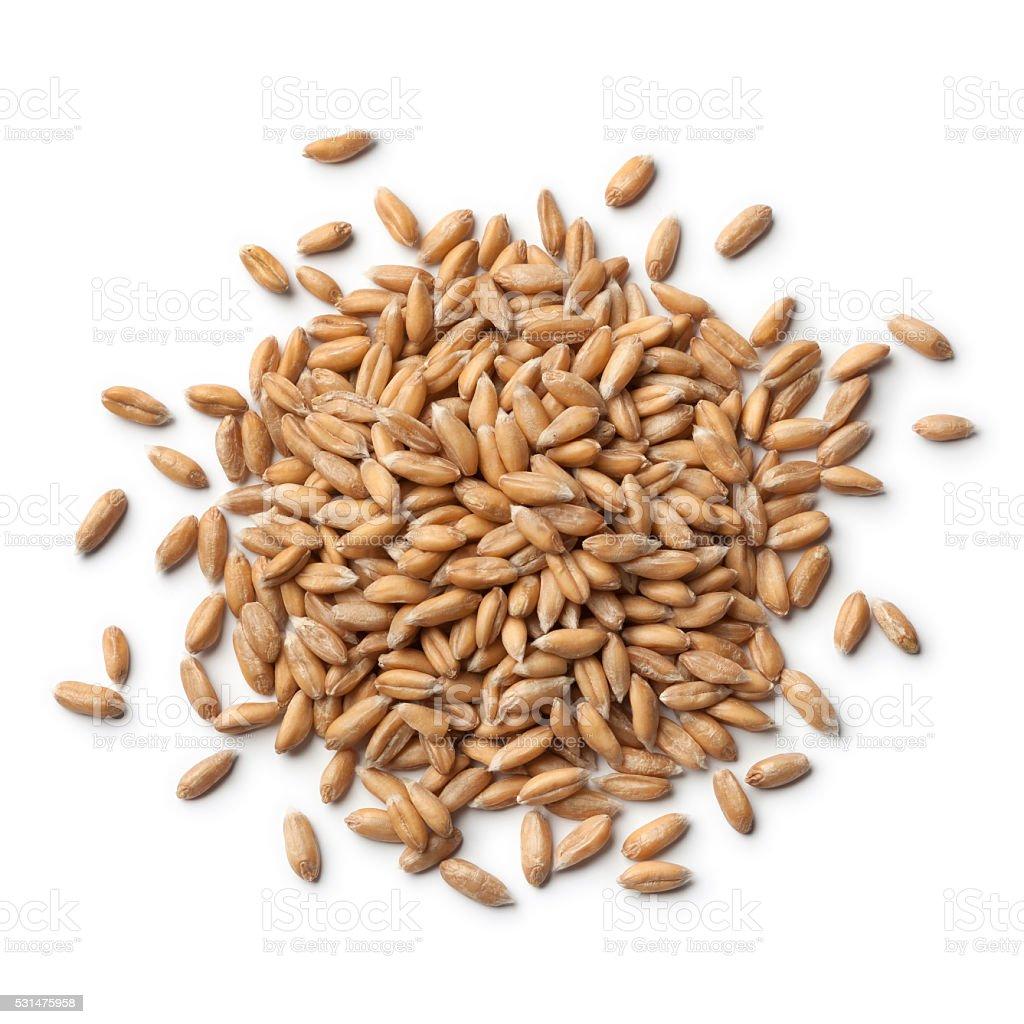 Heap of  Spelt wheat stock photo