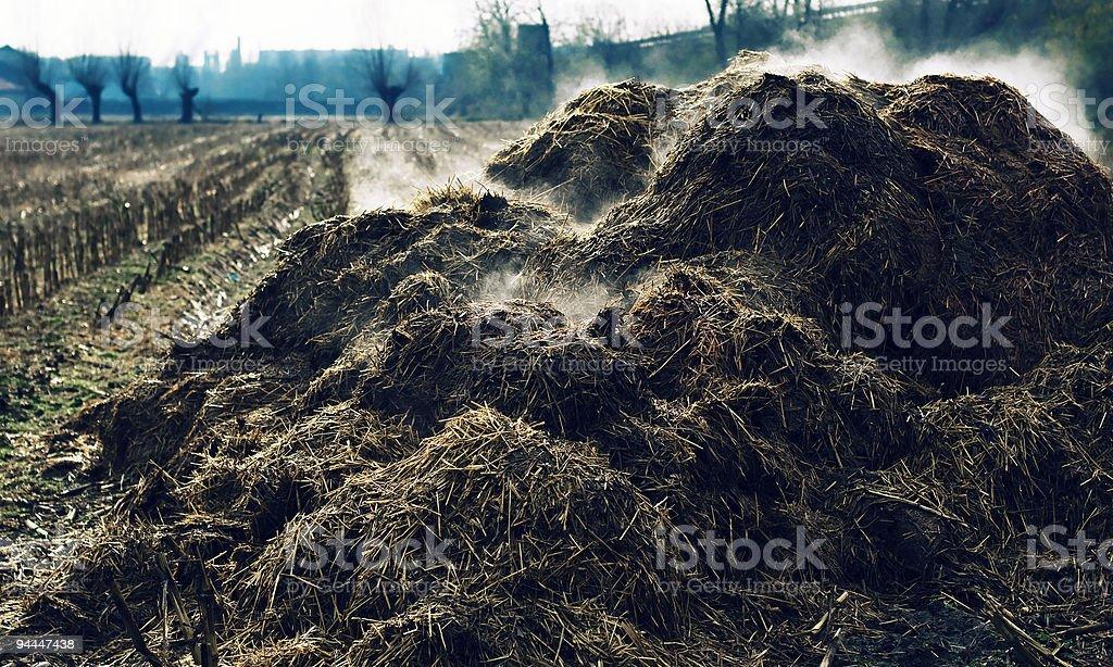 Amontoamento fumegante de vaca-dung foto royalty-free