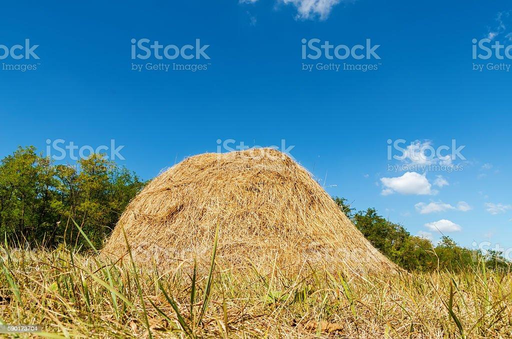 heap of straw on meadow near wood stock photo