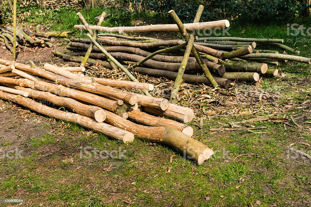 Heaps of peeled and unpeeled tree trunks stock photo