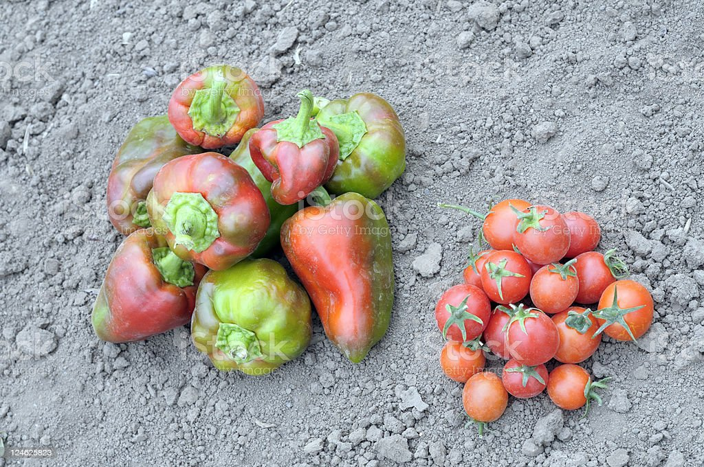 heaps of vegetables stock photo