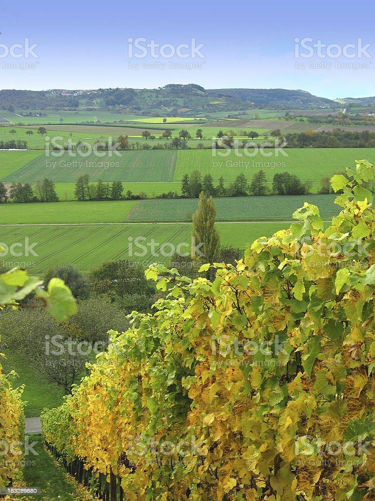 Heard it through the grapevine royalty-free stock photo