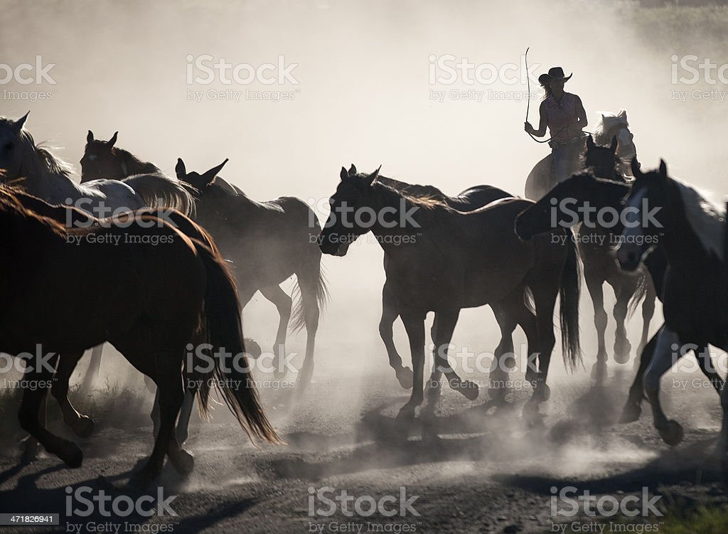 Hearding Horses on a Ranch stock photo
