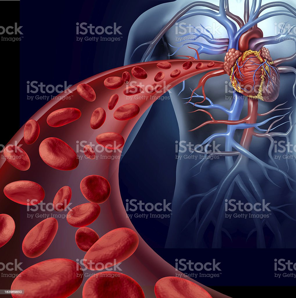 Heart Blood Health stock photo