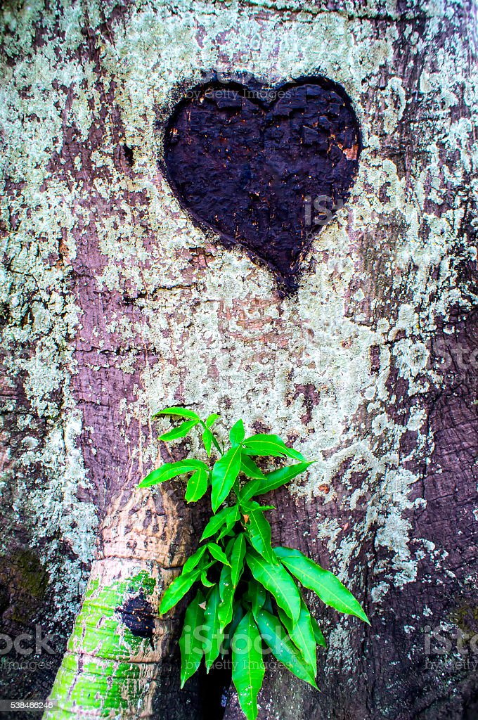 Heart carve on a tree stock photo