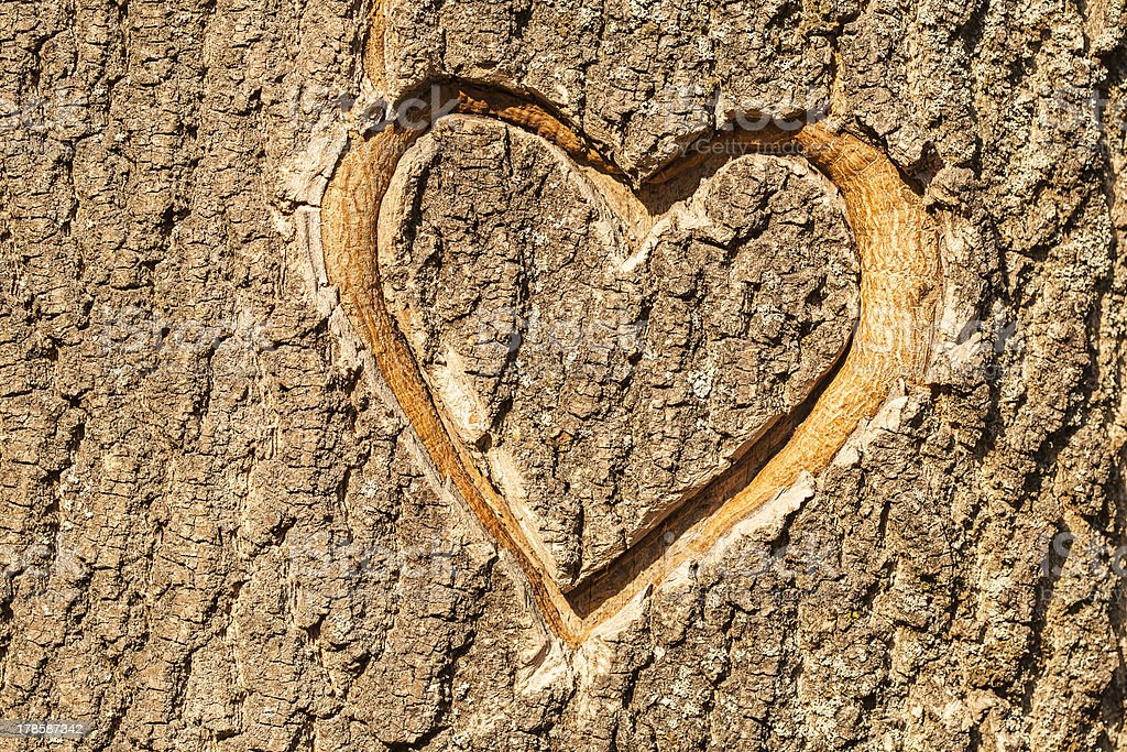 Heart carved in the bark of a tree stock photo
