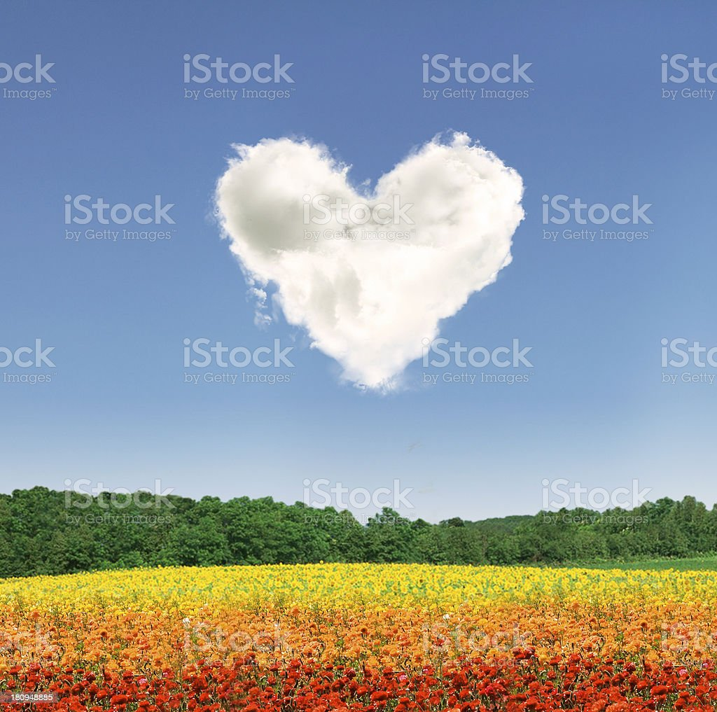 Heart cloud over colorful flowers stock photo