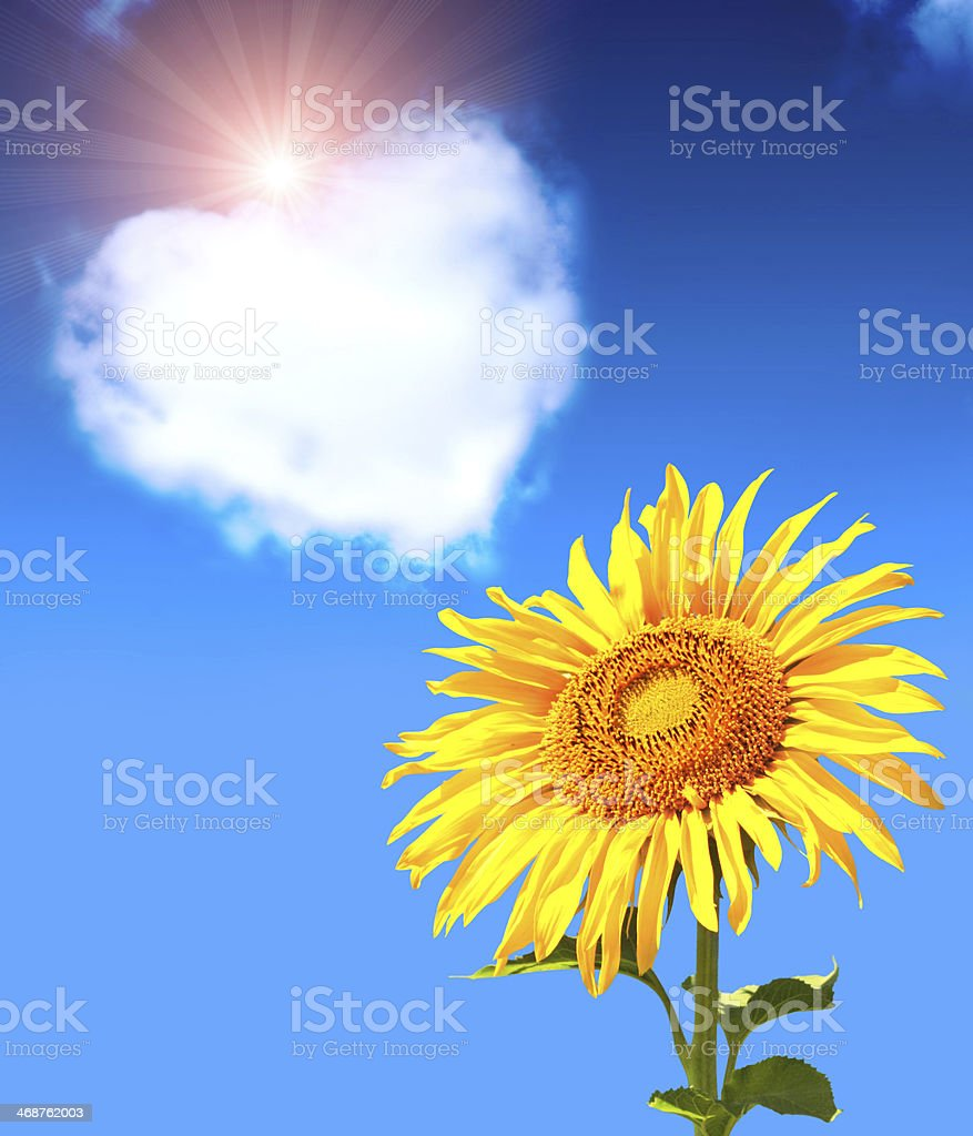 Heart from clouds and sunflower stock photo