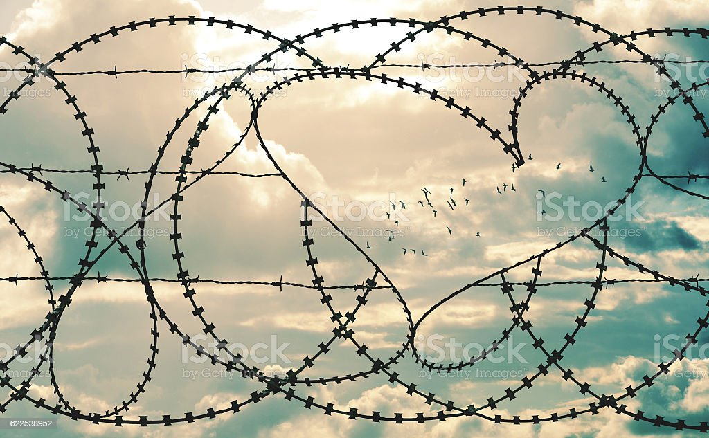 Heart in barbwire frames flock of birds in cloudscape background stock photo