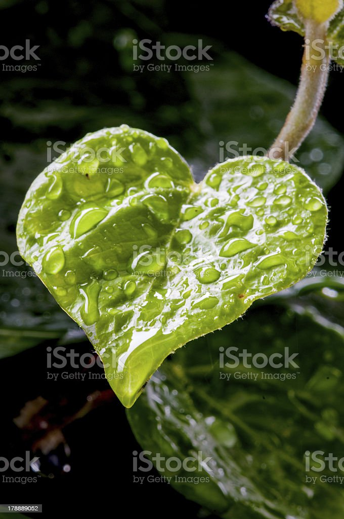 heart leaf royalty-free stock photo