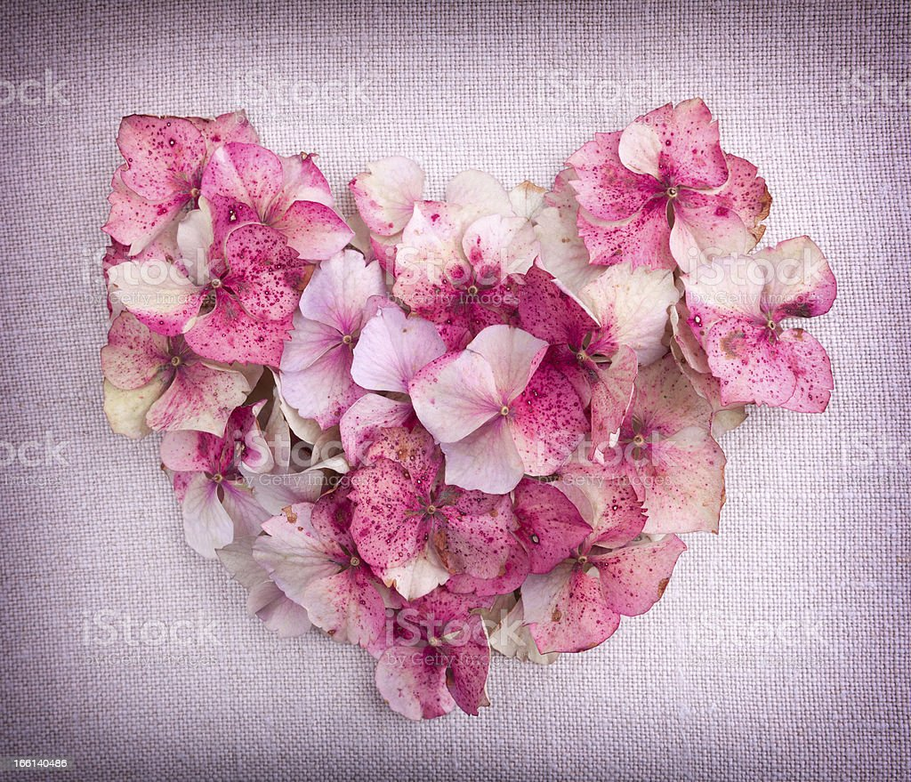 Heart made from pink hydrangea flower petals royalty-free stock photo