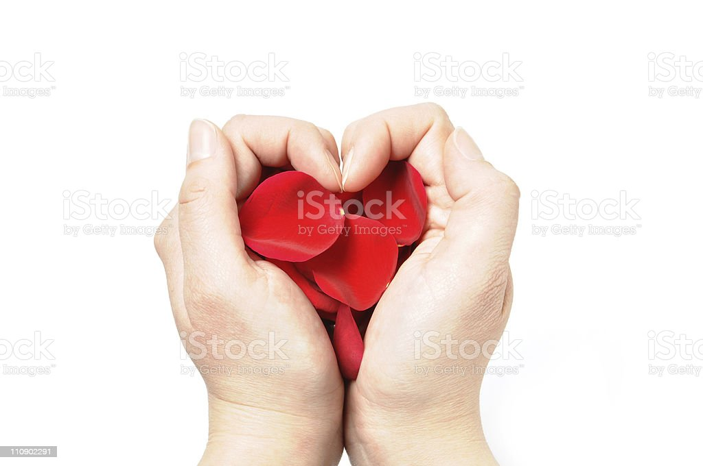 Heart made of rose petals in a hands royalty-free stock photo