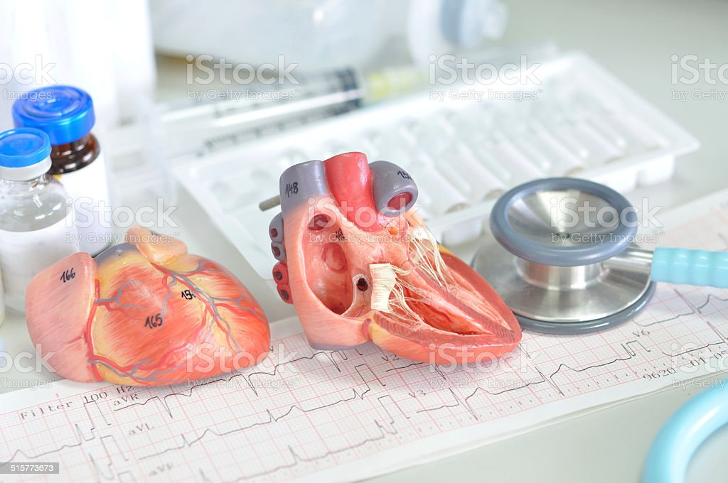 heart model and electrocardiograph stock photo