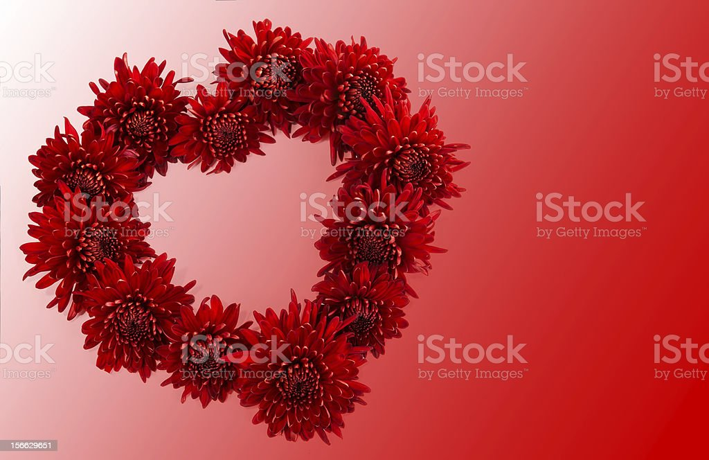 Heart of chrysanthemums. royalty-free stock photo