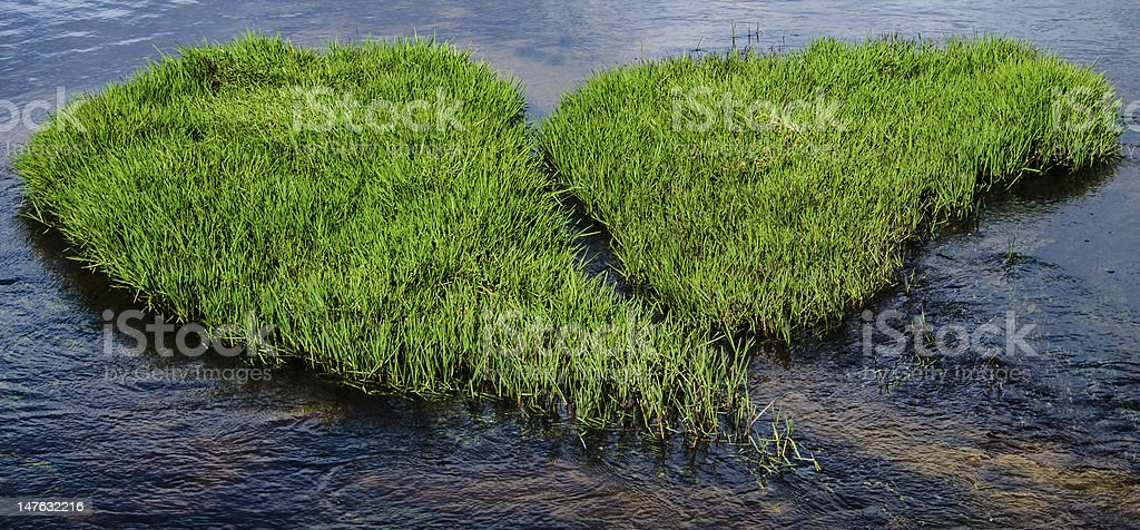 Heart of Grass royalty-free stock photo