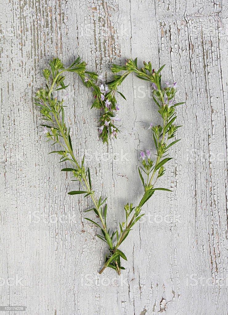 Cœur de satureja montana photo libre de droits