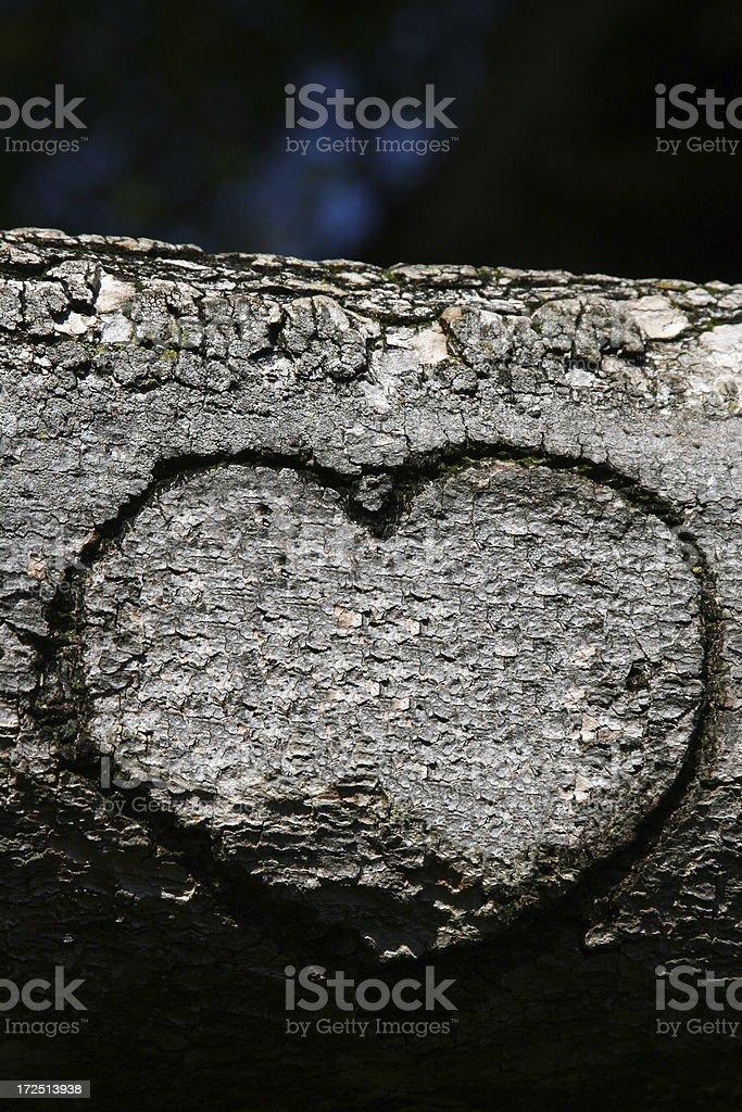 heart on a tree royalty-free stock photo