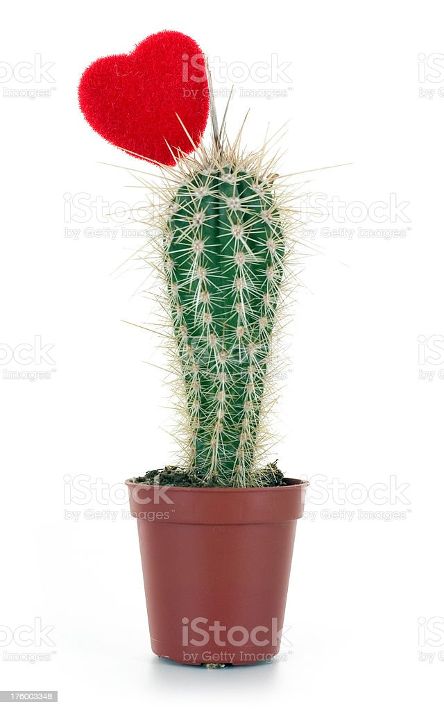 Heart on Cactus royalty-free stock photo