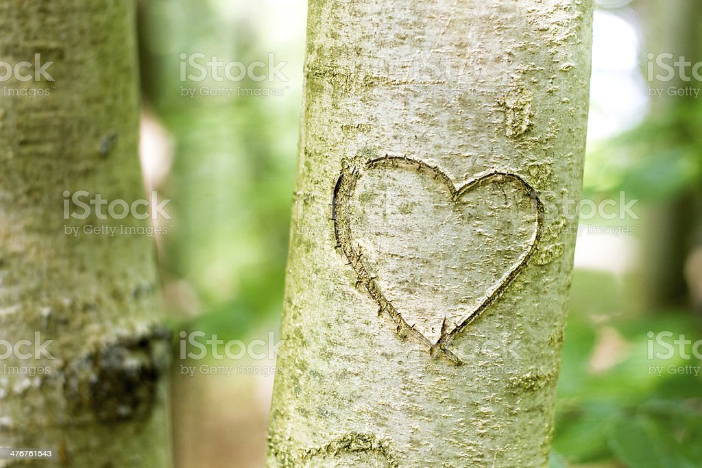 Heart scratched into a young tree royalty-free stock photo