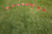 Heart shape applied on the lawn