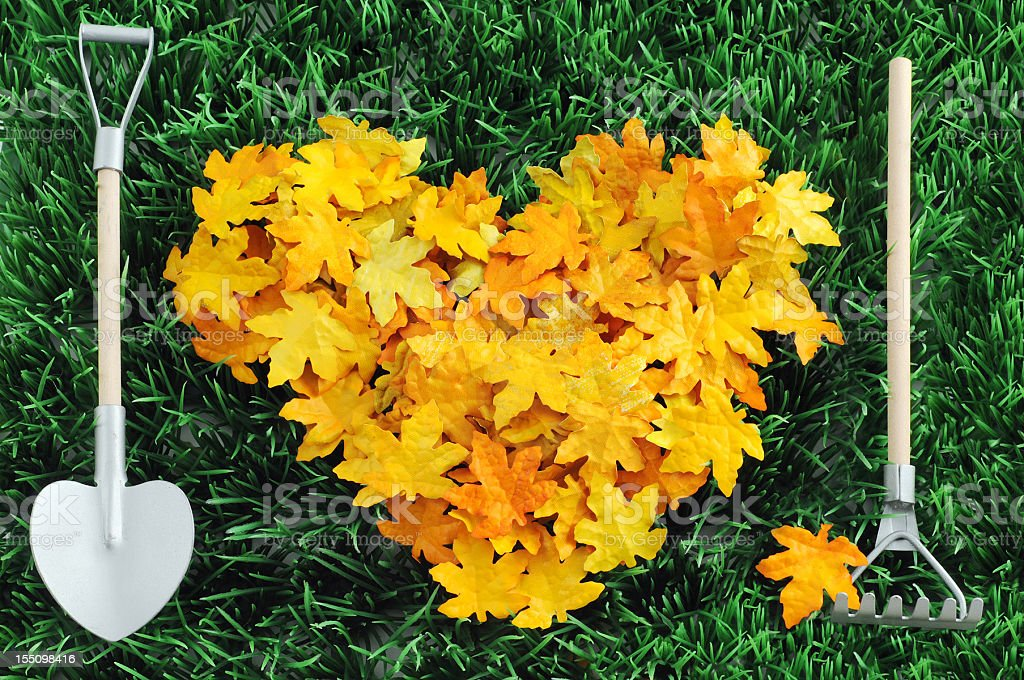 heart shape autumn leaf with gardening equipment on grass royalty-free stock photo